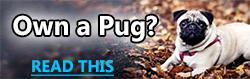 PugTips