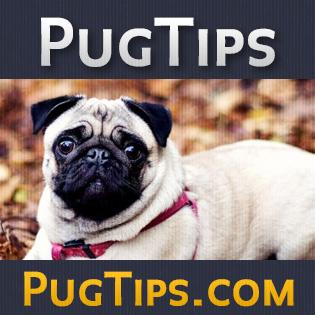 Pug Temperament Understand Your Dog Pug Tips
