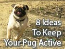 Pug Activities – 8 Ways to Keep Him Busy