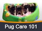 Pug Care 101