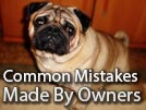 8 Mistakes Made by Pug Owners