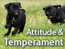 Pug Temperament