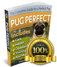 Pug Perfect: Book About Pugs