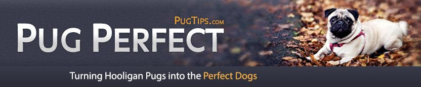 PugPerfect-PugTips.com