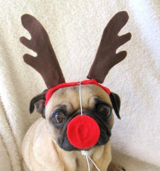 reindeer-pug