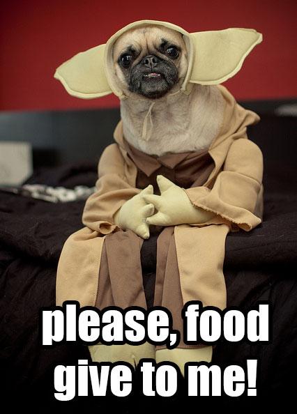 yoda-pug-pug-costume